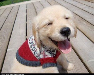 sweet-smiley-puppy