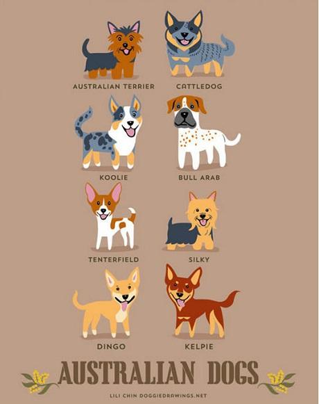 Asutralian Dogs