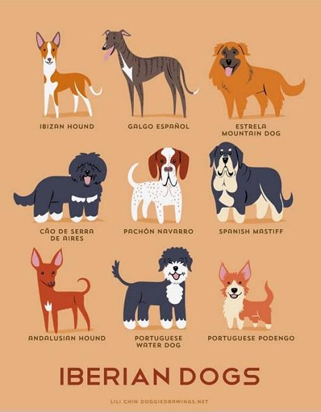 Iberian Dogs