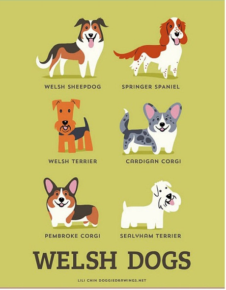 Welsh Dogs