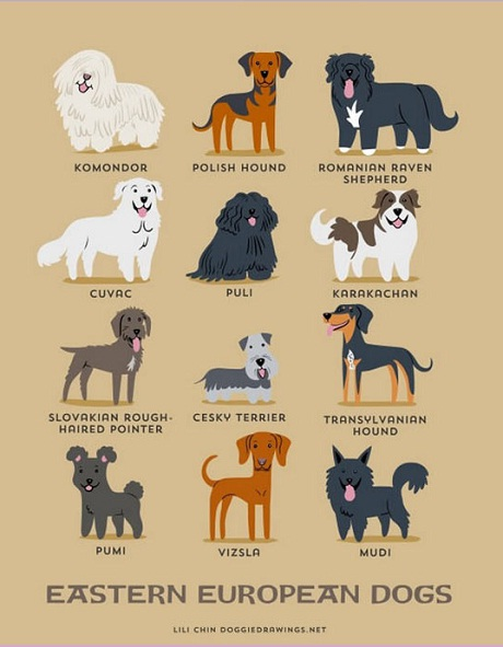 eastern european dogs