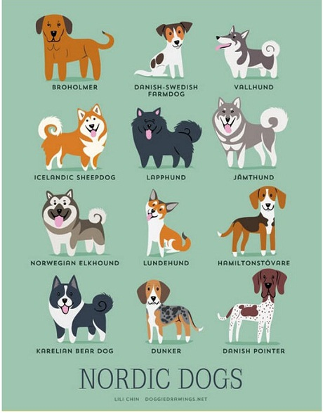 nrdic dogs
