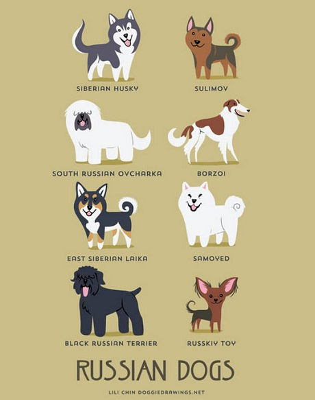 russian dogs