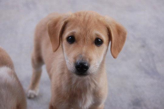 10-dog-breed11