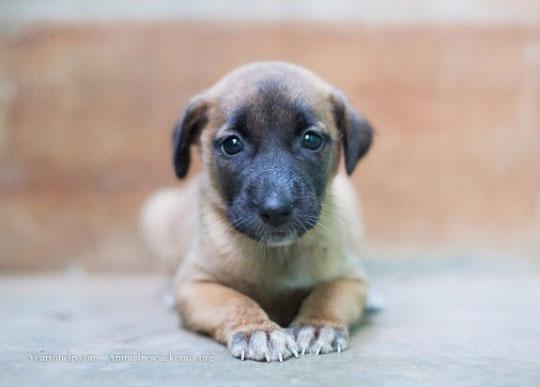 10-dog-breed13