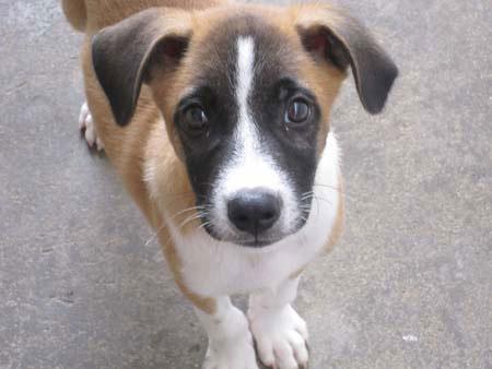 10-dog-breed15.