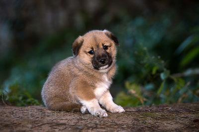 10-dog-breed16.