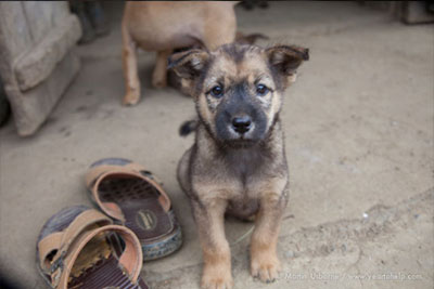 10-dog-breed17