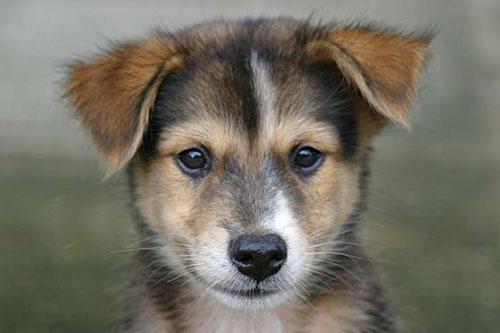 10-dog-breed3