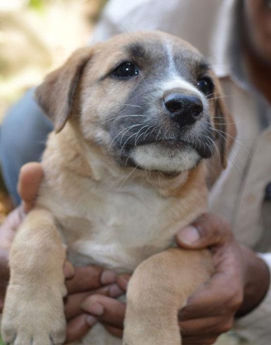 10-dog-breed4