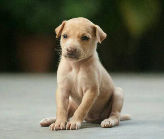 10-dog-breed6