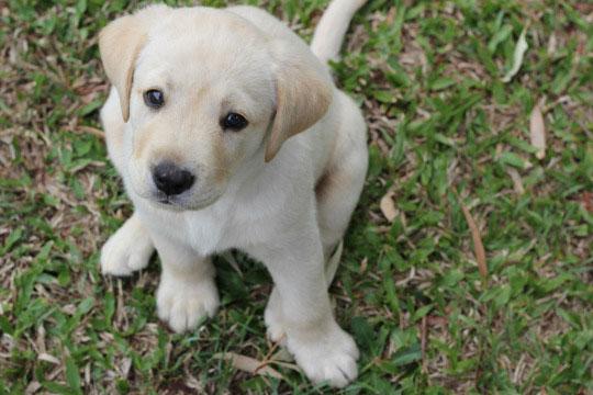 10-dog-breed7