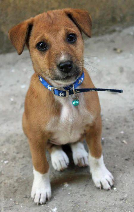 10-dog-breed8