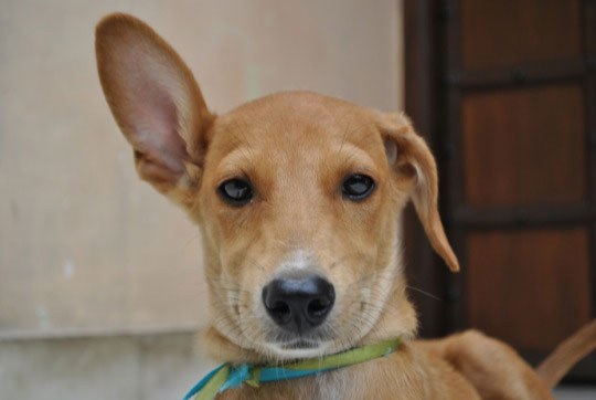 10-dog-breed9