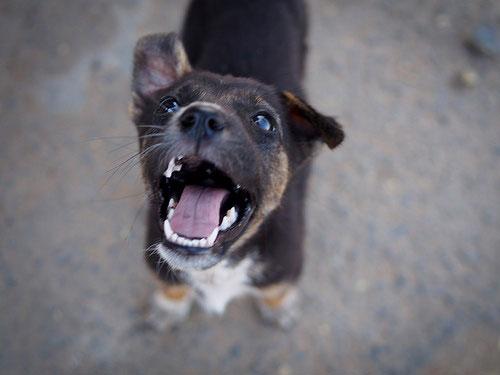 17-dog-breed (2)