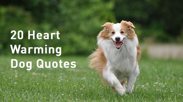 20-dog-quotes