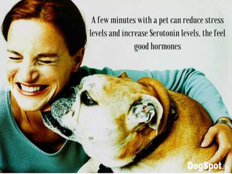 A few minutes with a pet can reduce stress
