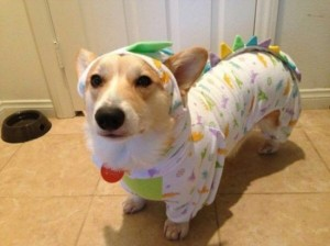 Dogs-In-Pyjamas-EMGN2