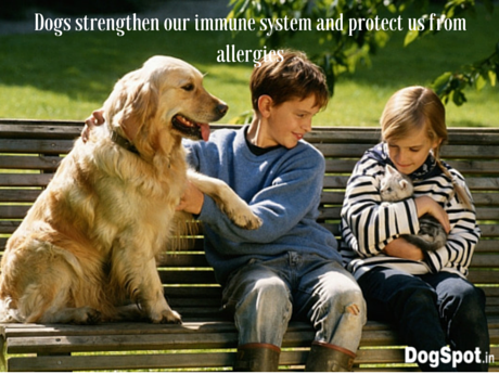 Dogs strengthen our immune system and protect