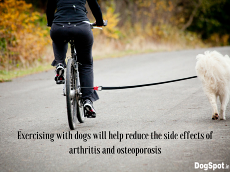 Exercising with dogs will help reduce the