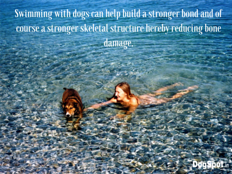 Swimming with dogs can help build a stronger