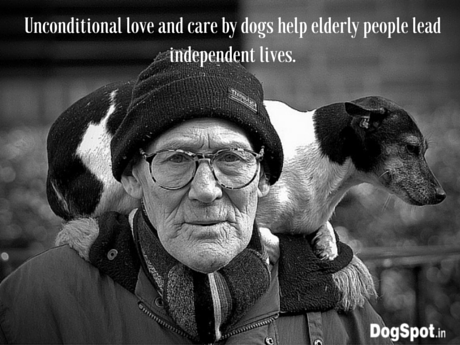 Unconditional love and care by dogs help