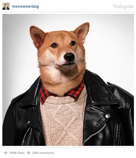 mens wear dog