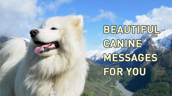 14-beautiful-dogs
