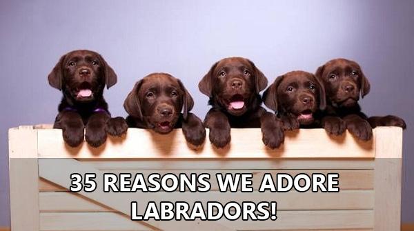 35-reasons