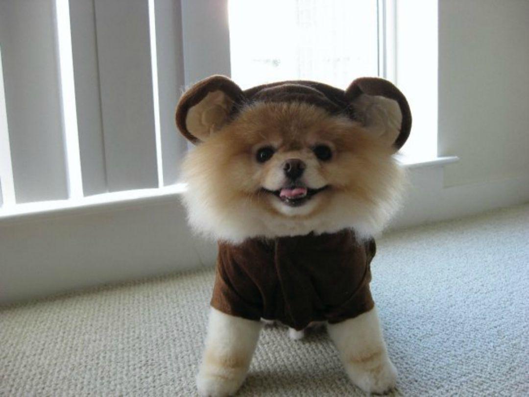 boo-the-dog-halloween