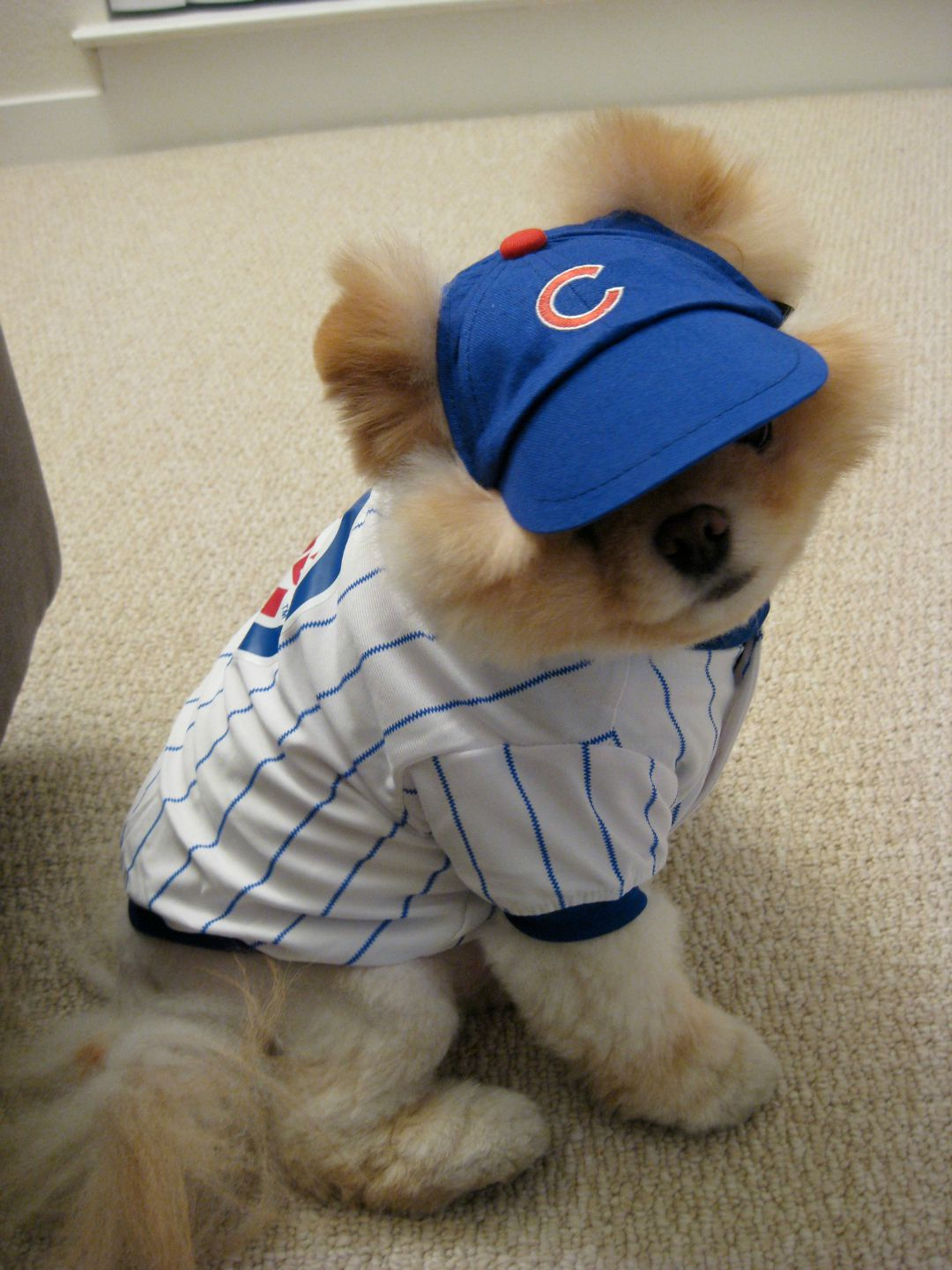 chicago-cubs-boo-the-dog