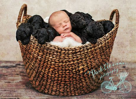 dog-gives-birth-puppies-mother-baby-same-day-kami-klingbeil-1