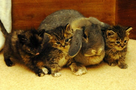 rabbit and kittens