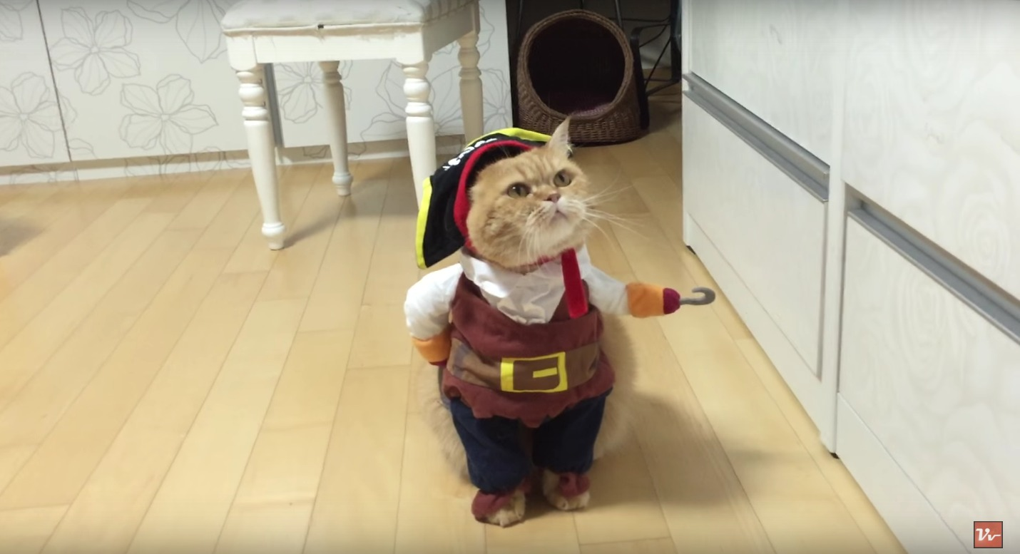 pirate-cat-costume2