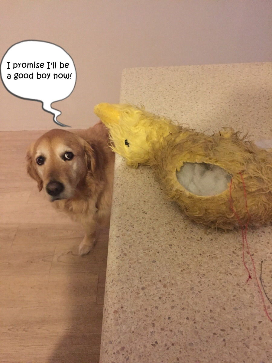 dog5_f