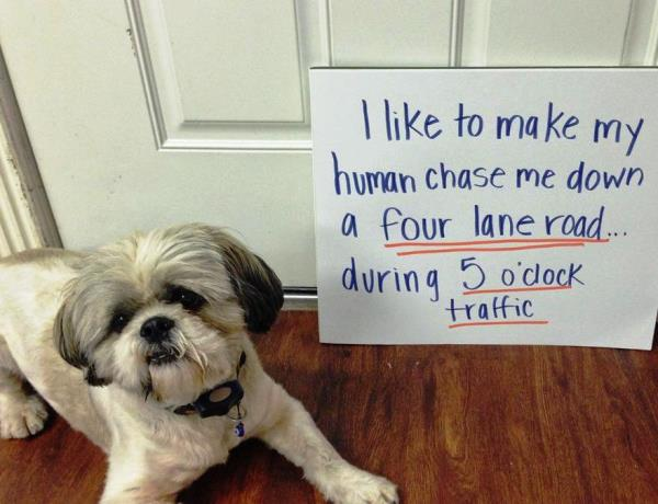 dog-shaming-chase-me-down