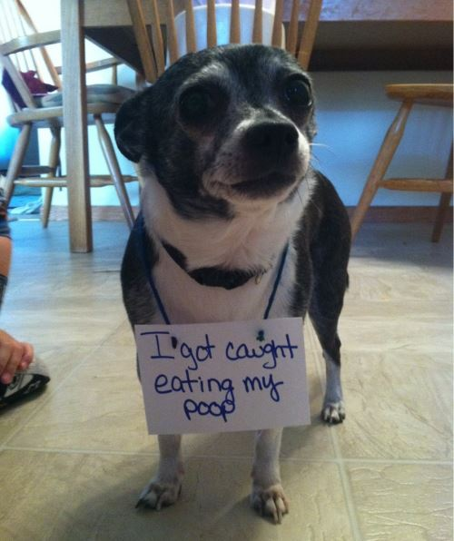 dog-shaming-eating-poop