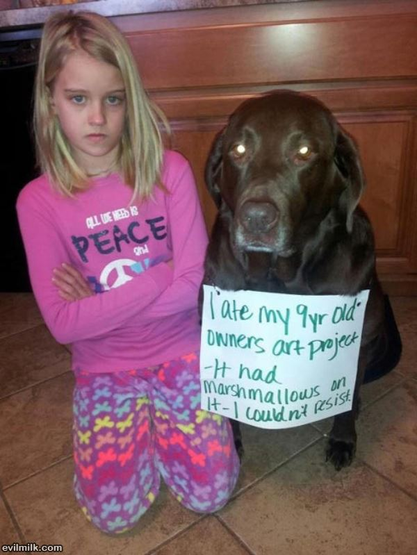 dog-shaming-homework