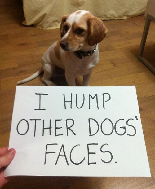 dog-shaming-humping