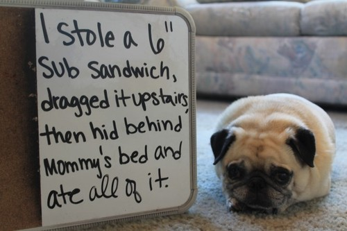 dog-shaming-pictures-sub-sandwich
