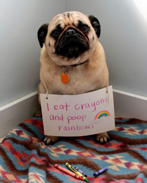 dog-shaming-poop-rainbows