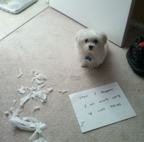 dog-shaming-tearing-up-tissues