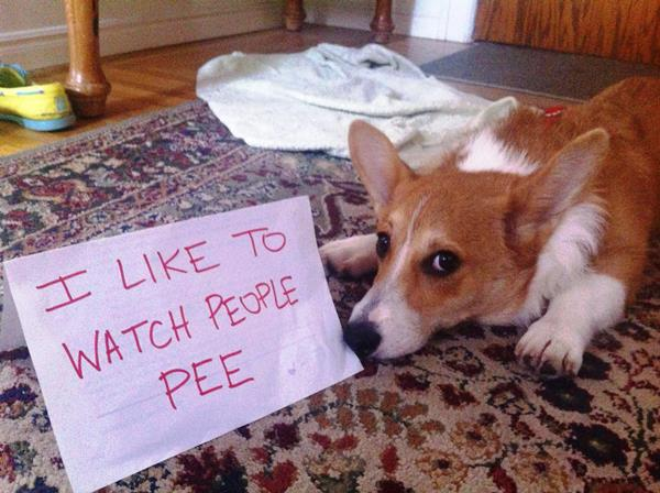 dog-shaming-watch-people-pee