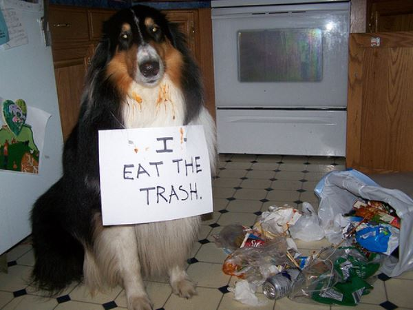 i-eat-trash