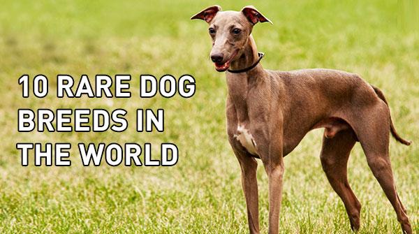 10-dog-breed