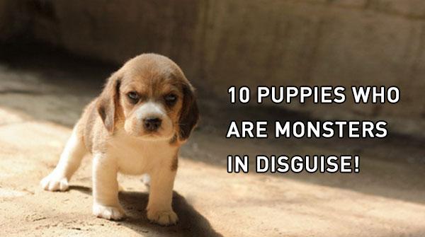 10-puppies