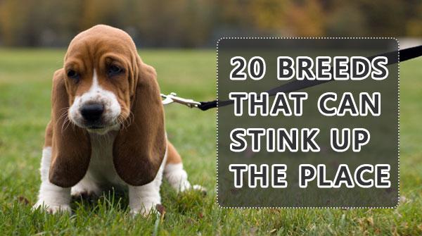 20-breeds