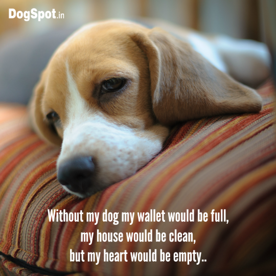 20-dog-quotes10