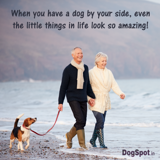 20-dog-quotes12