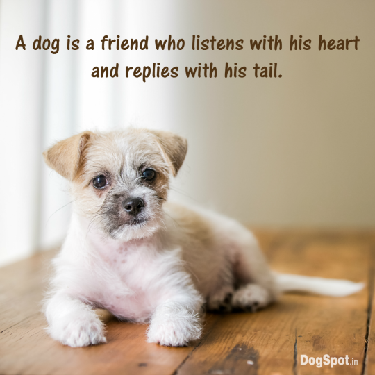 20-dog-quotes13